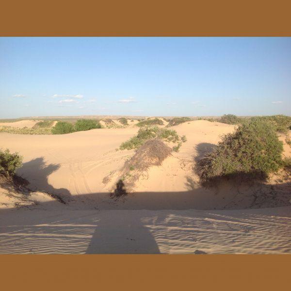 Mescalero Sand Dunes